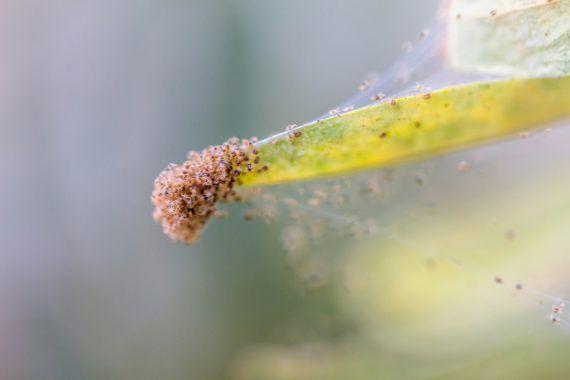 Gurken Pflegen Tipps Fur Eine Reiche Ernte Plant Happy Schadlinge Schnecken Im Garten Gartenarbeit