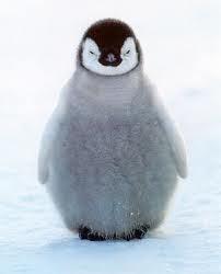 Penguin meditating