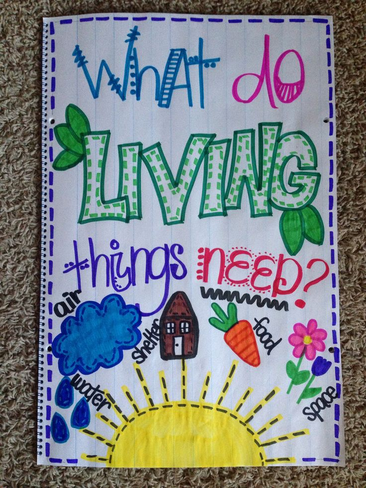 Living things anchor chart