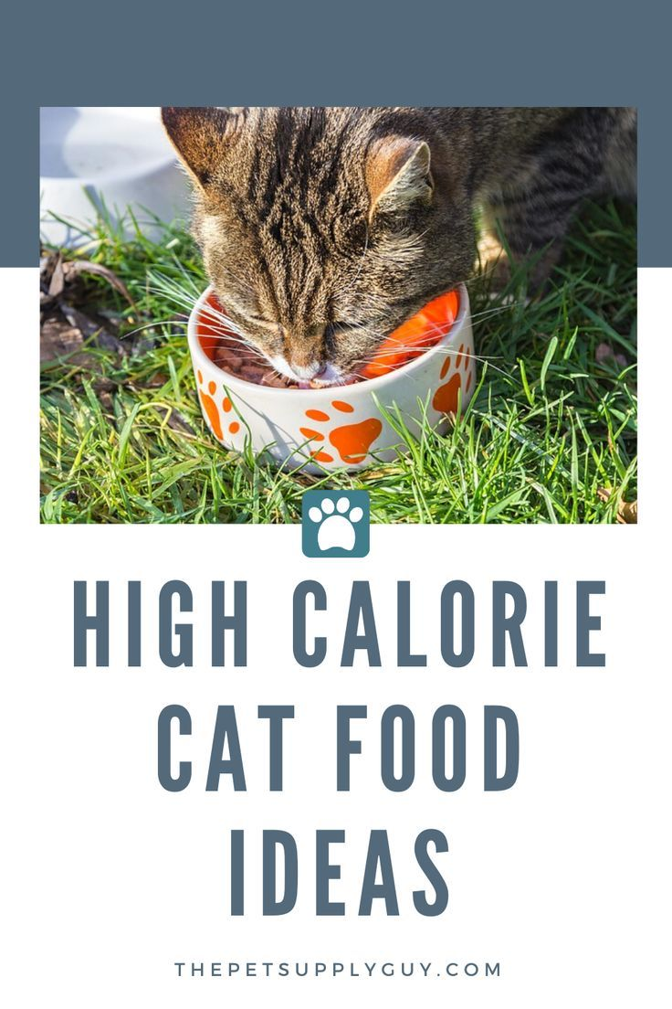 Pin On Cat Facts Tips