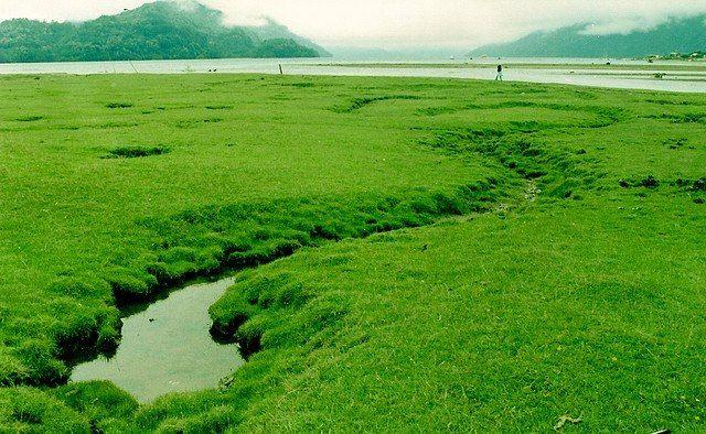 El Hornopiren al sur de Chile , son paisajes humedos y frios  y verdes