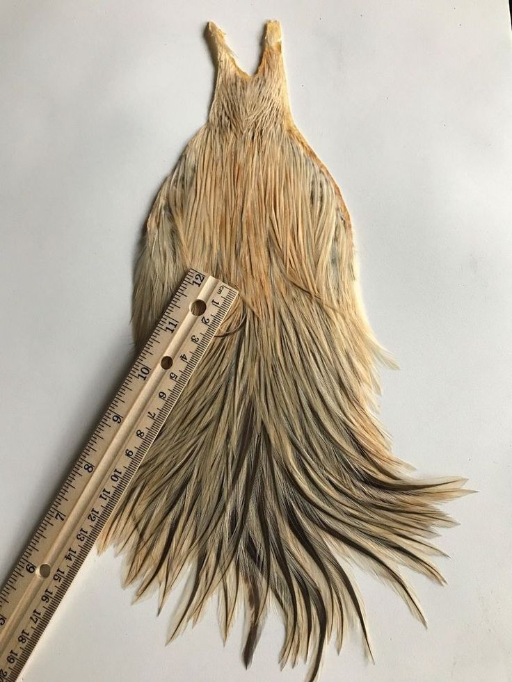 METZ American Rooster Saddle Hackle Fly tying feathers Fly tying materials  #Whiting