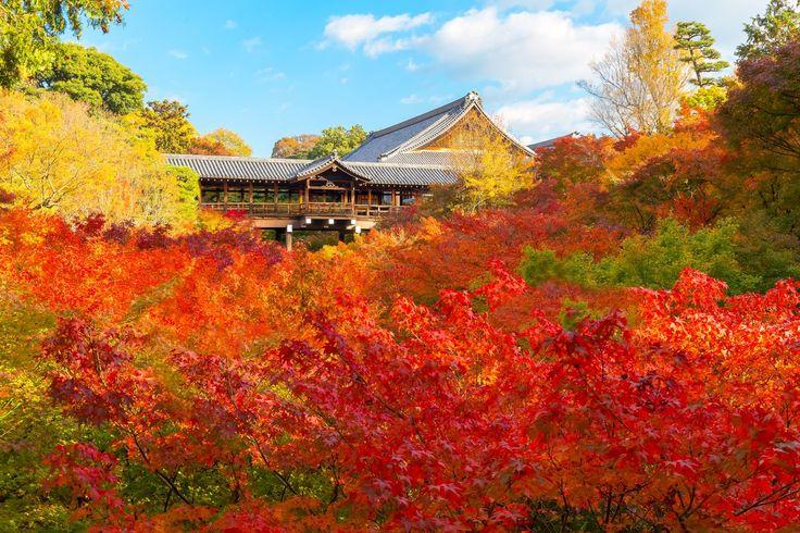 京都駅から1駅のところに京都随一の紅葉ともいわれる「東福寺」があります。毎年紅葉シーズンには、全国からたくさんの観光客が訪れます。特に絶景スポットである通天橋には、入る前の長蛇の列、そして拝観受付終了なんて事もあるほどの人気ぶり。それほどまでの「東福寺」の魅力、そして通天橋だけではないおすすめ紅葉スポットもお教えします。(※2016年10月4日最終更新)