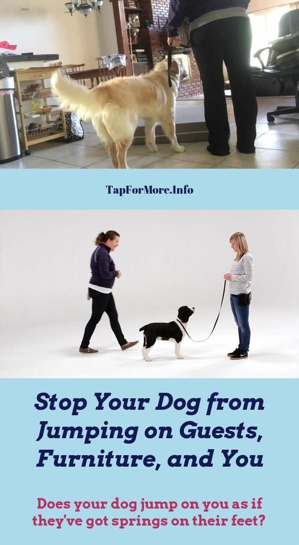 Stop Dog Jumping And Training Dogs Tricks Check The Pic For Lots