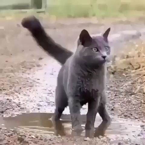 Who said cats don't like water ? I even love muddy water – Linda McClain