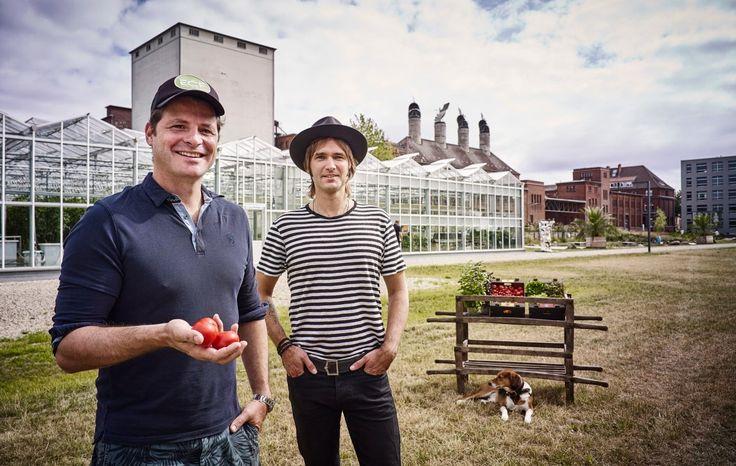 Bei ECF Farmsystems leben Barsche und Salat in einem sinnvollen gut durchdachtem Kreislauf zusammen