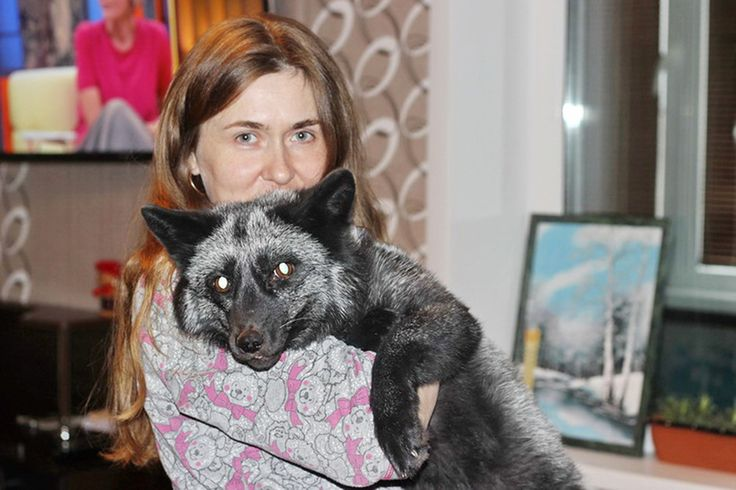 """A woman in Russia was taken to a fox farm so she could pick out the type of fur she wanted for her new coat — but she ended up leaving with a new pet instead! """"I'd much rather buy her and release her than have her killed and wear her,"""""""