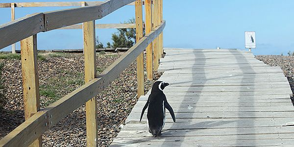 Pensínsula Valdés Puerto Madryn Chubut Trelew Patagônia Argentina pinguins