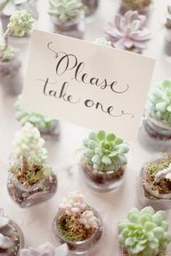 Maybe we could just find some clear glass candle holders that little plants could fit in. Planted flowers wedding favors...cute idea!