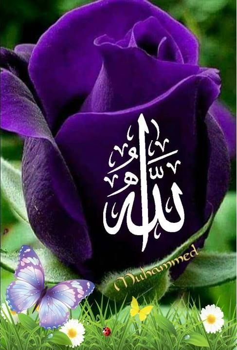 Началом октября, мусульманские картинки цветы с надписями