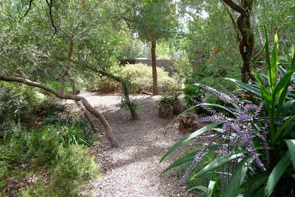 1396 best australian native gardens images on pinterest