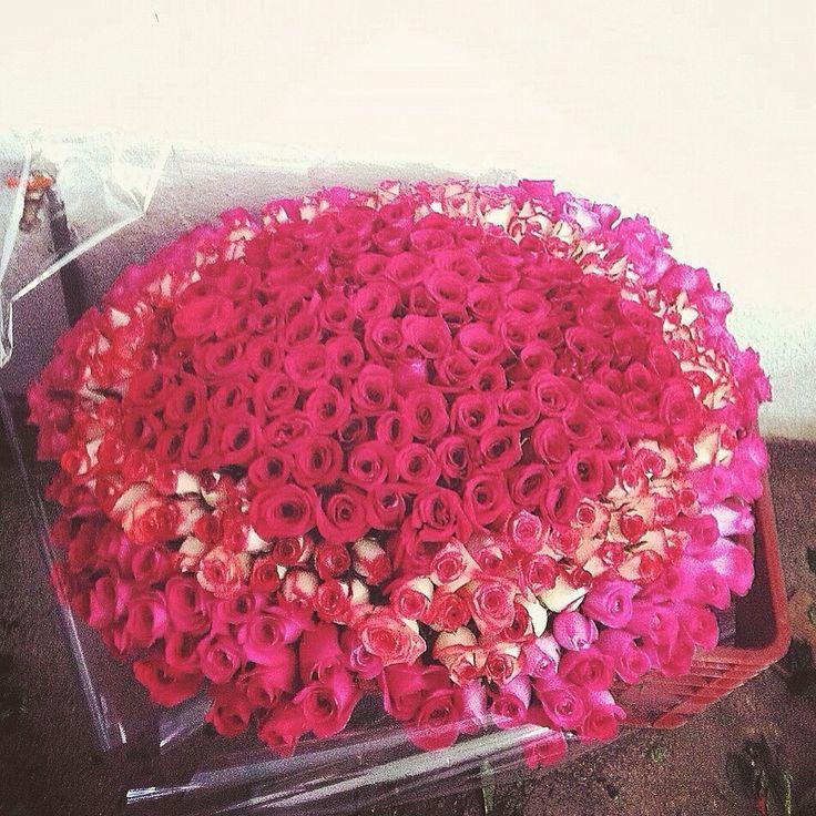 25 best r o s e s h i r e. images on Pinterest | Blossoms, Flower ...