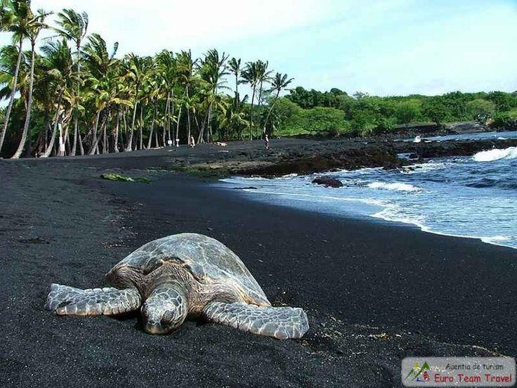 Nisipul negru de pe plaja Punaluu din Hawaii Nisipul negru pe Punaluu este format din bazalt si s-a creat din lava care curge din exploziile vulcanice in ocean si apoi se raceste. Plaja Punaluu este frecventata de broastele testoase hawksbill ce sunt pe cale de disparitie is pot fii vazute pe nisipul negru.
