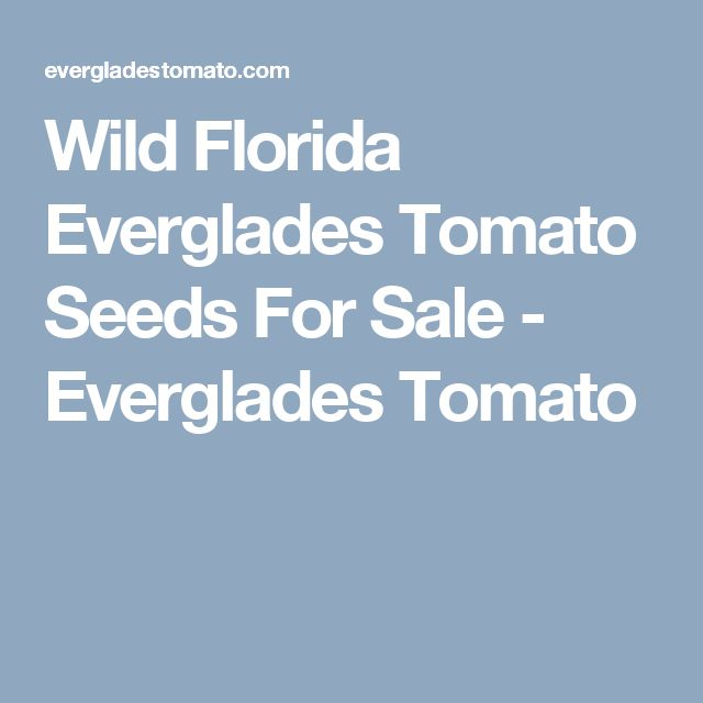 Wild Florida Everglades Tomato Seeds For Sale - Everglades Tomato