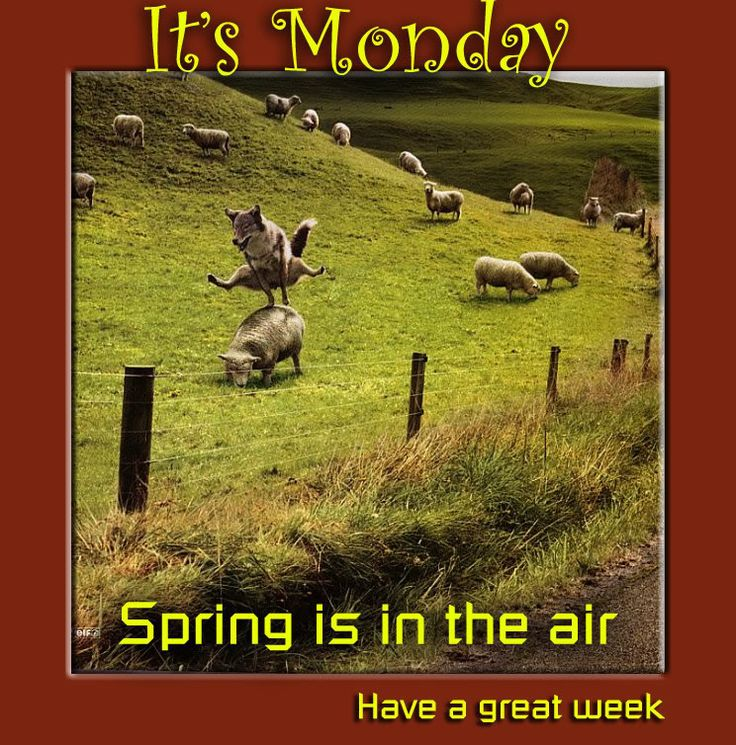 Image result for happy new week funny pictures