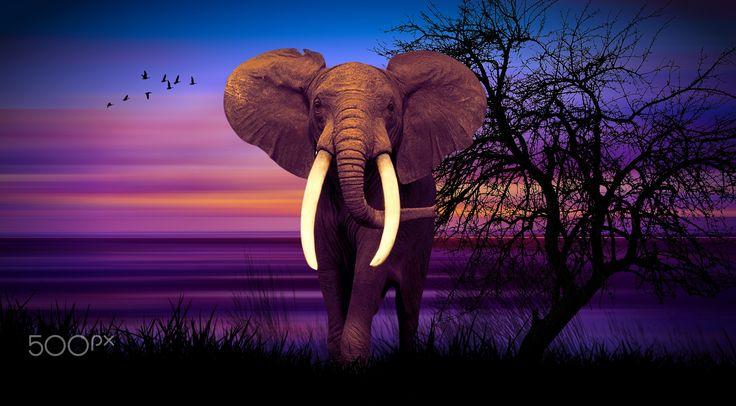 Elephant at dusk - null
