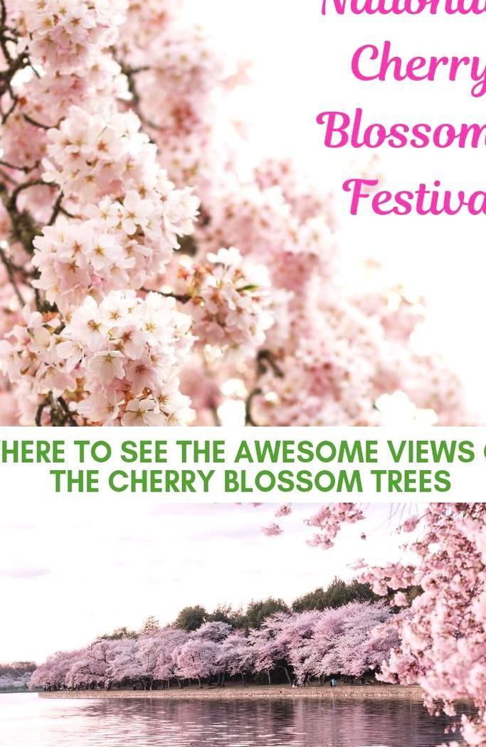 Visit The Spectacular National Cherry Blossom Festival 2019 In Washington Dc National Cherry Blossom Cherry Blossom Festival Cherry Blossom Tree Cherry Blossom