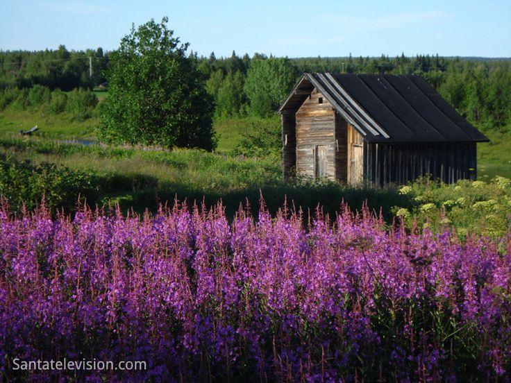 Paisagem de Verão vista de Kittilä na Lapônia Ocidental na Finlândia