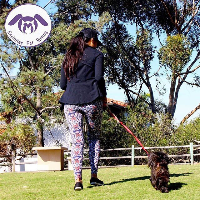 Dog Walking - Coconut 🐶💛! . . We always offer a free Meet & Greet 💛 . . Insured & Bonded by Pet Sitter Associates. . . Our Services: . . *Private Dog Boarding* *Private Dog Walking* *Short Visits* *In Home Care* *Cat Care* *Pet Transportation* *Pooper Scooper* . . More Info:  Yumi@EncinitasPetSitting.com  760 846 8090 . . 💜💜💜💜💜💜💜💜💜💜💜💜💜💜 #ranchosantafelocals #sandiegoconnection #sdlocals #rsflocals - posted by Encinitas Pet Sitting…