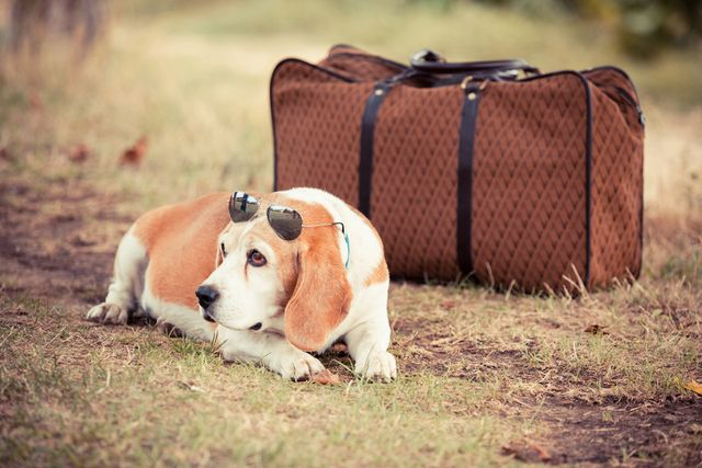 Dog with suitcase ready for a Smoky Mountain vacation in one of our pet friendly cabins
