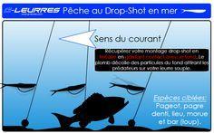 drop shot peche au leurre souple shad en mer pageot pagre denti merou bar lieu morue leurres souples