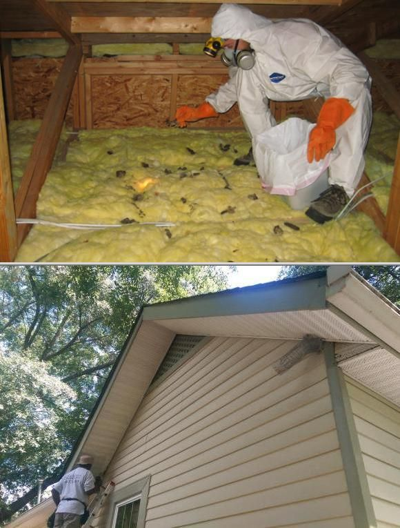 Best 25 blown insulation ideas on pinterest attic insulation let jonathan younts help you if you need to hire some of the efficient home insulation contractors in the city who can provide quality attic blown solutioingenieria Images