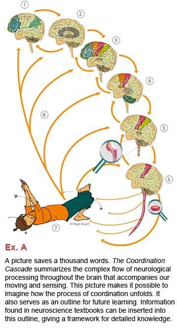 Feldenkrais and the Brain - The Feldenkrais Method of Somatic Education
