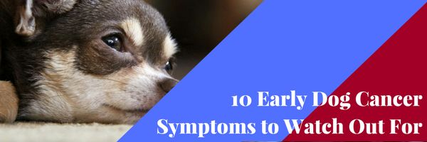 Identifying early dog cancer symptoms is important for everyone in the dog's home & your dog himself. Here are 10 Early Dog Cancer Symptoms to Watch Out For