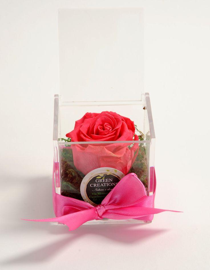 rosa vera lunga durata con muschio nordico vero... ideale come regalo o bomboniera special gift!