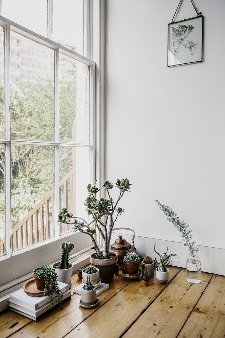Book Review // House of Plants by Caro Langton & Rose Ray