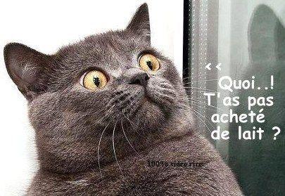 Dessins humoristiques sur les chats..