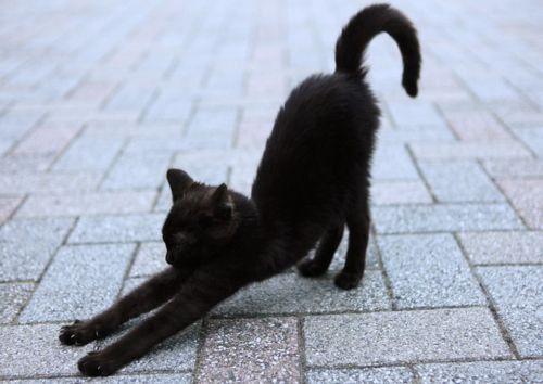 Immagine di cat, black, and animal