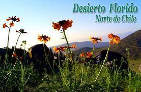 hermosas flores nativas de la región de coquimbo