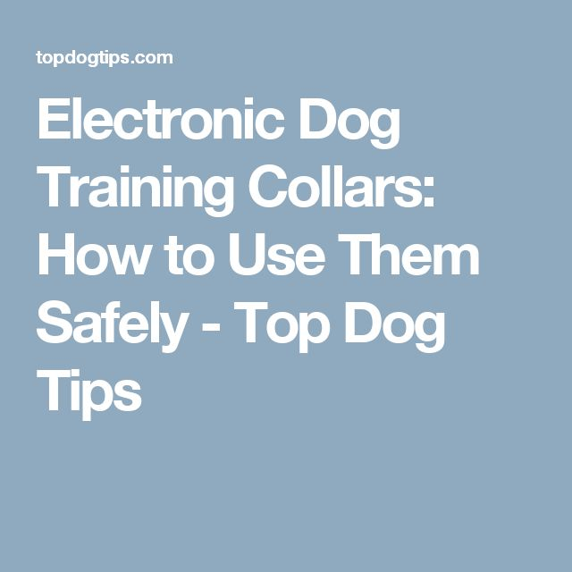 Electronic Dog Training Collars: How to Use Them Safely - Top Dog Tips