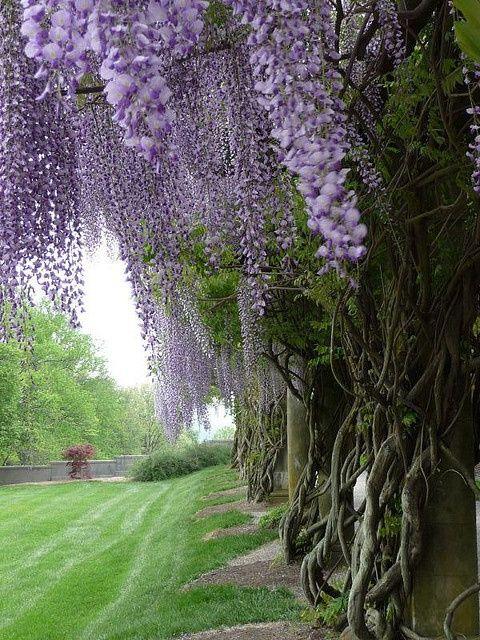flowersgardenlove:  Biltmore Estate gard Flowers Garden Love