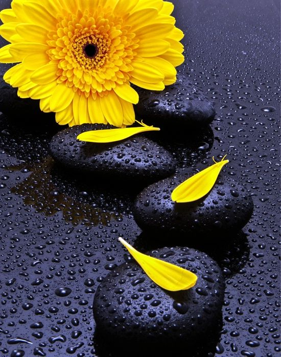 Petal Rock Yellow Black Water Drops Very Nice Picture Pictures Pinterest Flowers And Color Splash