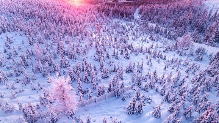 「冬のワンダーランド」。そんな言葉もしっくり来る写真を紹介しましょう。写真家ティーナ・トルマネンさんが撮り続けているのは、フィンランドのラップランドの風景。そこには、オーロラや雪、森、トナカイ、雪が積もった家の灯りなど、静寂のなかにも美しさが詰まっていました。トルマネンさんは1998年に、生まれ育ったラップランドから首都のヘルシンキへ移住をしたそうです。ヘルシンキでは写真スタジオのアシスタン...