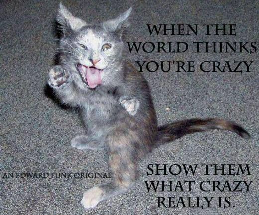 Funny pets, cat humour. For the funniest pet cats pics and also quotes check out www.funnyjoke.lol