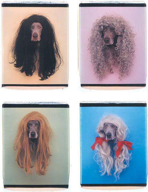 William Wegman, Francis, Cher, Pat and Sally (1998), via Artsy.net