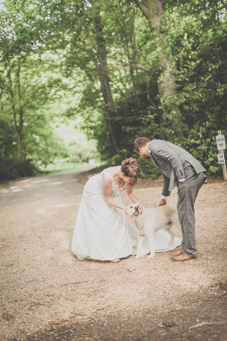 beach wedding south west uk%0A This gorgeous lab snuck into the wedding pictures at Burloes Hall Weddings  in Royston  Hertfordshire