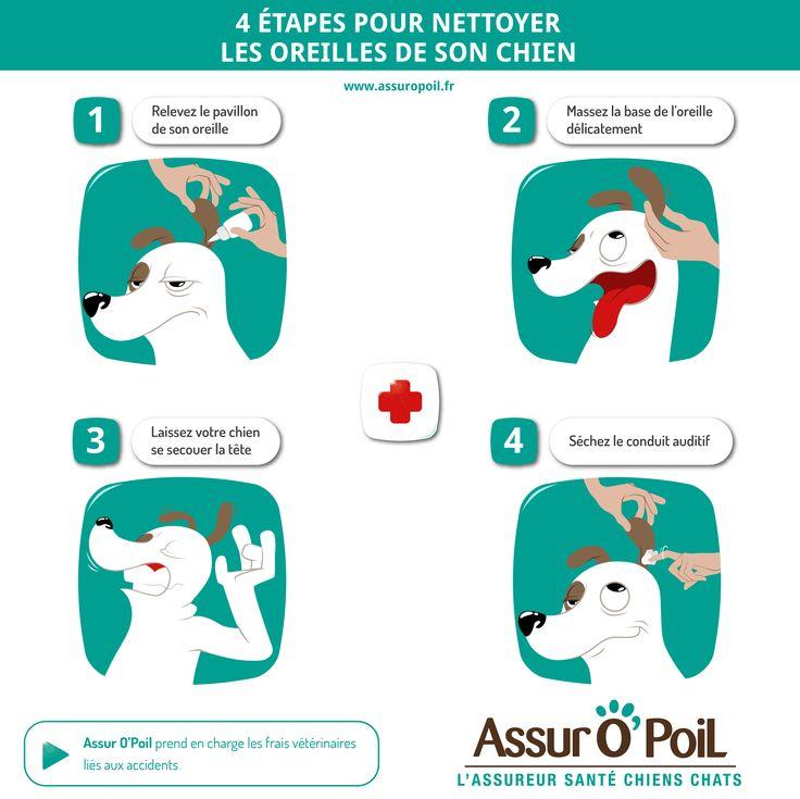 4 étapes pour nettoyer les oreilles de son #chien avec la #mutuelle santé #animaux Assur O'Poil