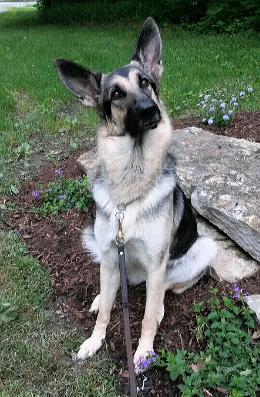 8ae0e964cd2e The Dog Trainer - Dog Training