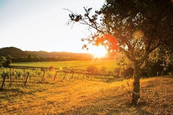 Wine Country To Do: 50 Things to Do in Napa and Sonoma Before You Die | 7x7