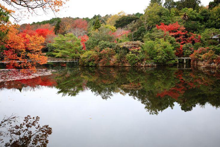 龍安寺の鏡容池(きょうようち)の紅葉