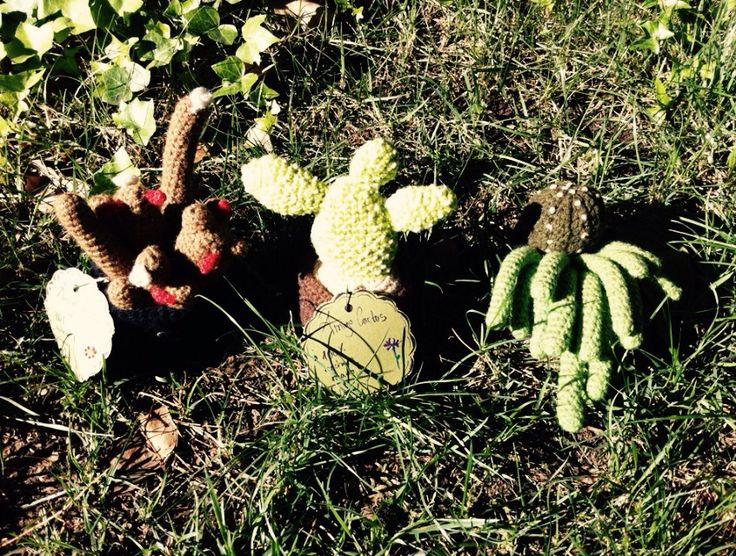 Some of my knitted cacti projects for AmigoCactus