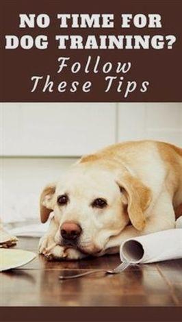 dog training beds, #dog training youtube zak, dog training 7 weeks