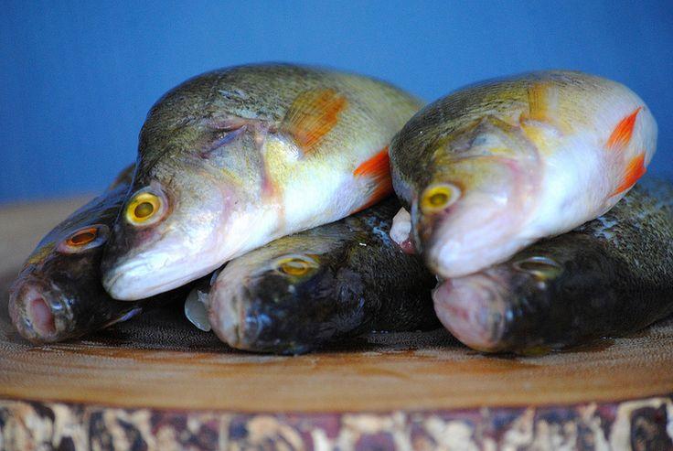 Пресноводная рыба в магазинах североамериканских штатов это большая редкость. Уж и не знаю почему так случилось, то ли хлопот с ее выловом много, то ли американцы…