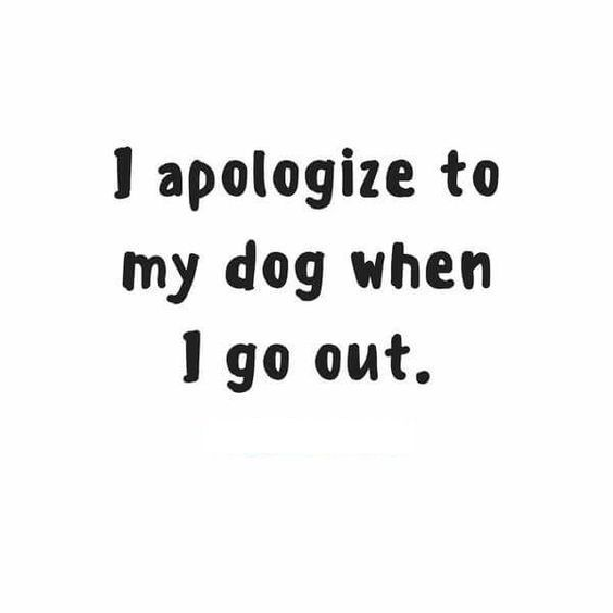 "Funny Dog Quotes. Dog quotes. Quote of the Day ""I apologize to my dog when I go out""."