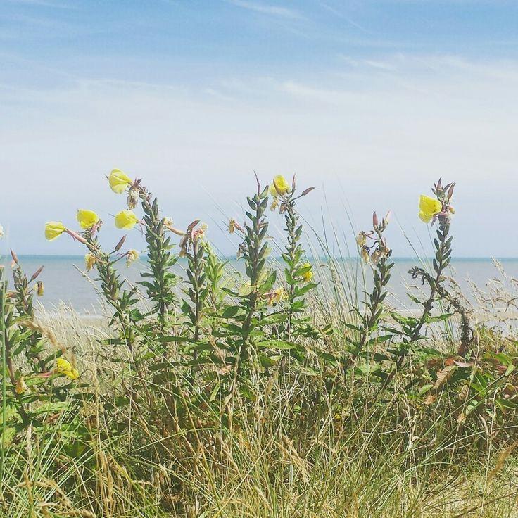 Greatstone Beach
