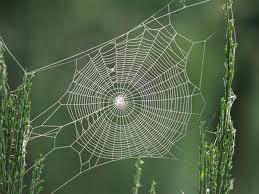 ... Spiders Web, Layout Inspiration, Tangled Web, Spider Webs, Spiders Nets, Spiders Silk, Desktop Backgrounds, Wild Web, Desktop Wallpapers